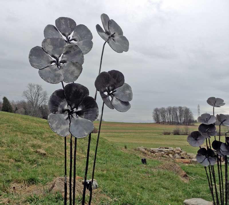flowers-field-800